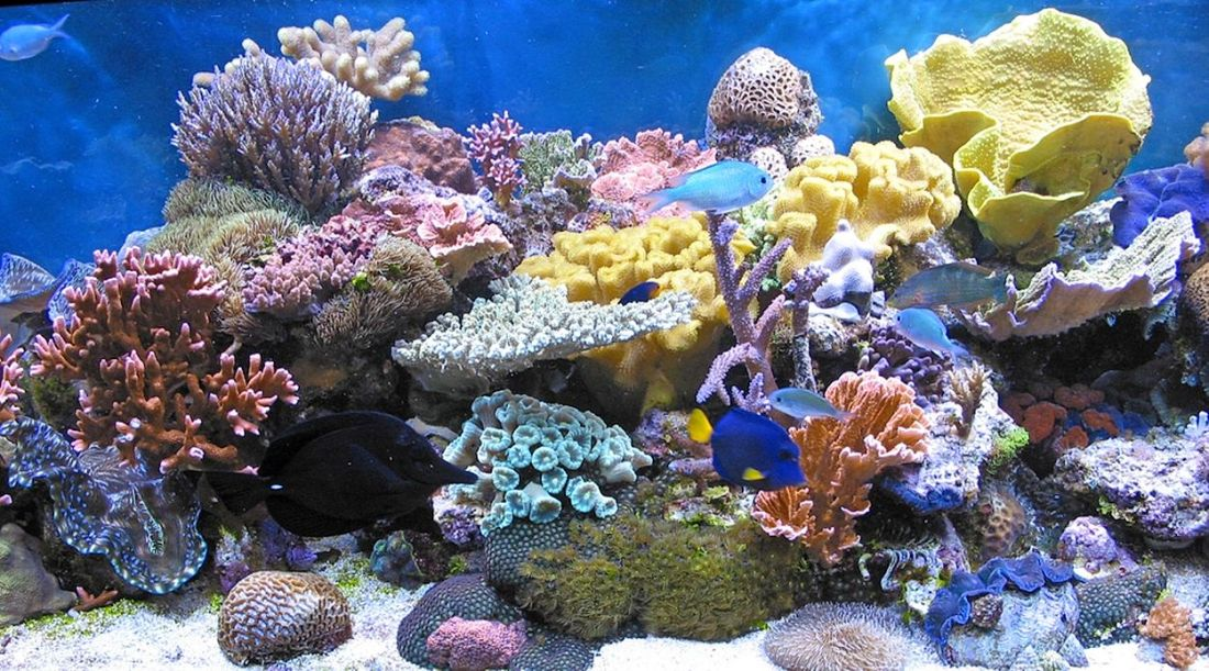 145-korale